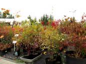 Lepiej sadzić jesienią niż wiosną