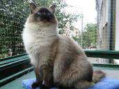 Najpiękniejsze koty będą w Gorzowie