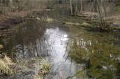 Obok rzeczki i rezerwatu po krainie żurawi