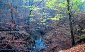 Las to nasze wspólne dobro, a nie rzeczpospolita myśliwych!