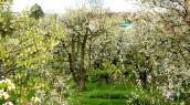 Ogrodnicy bez ziemi, to mimo wszystko nie są ogrodnicy