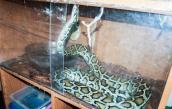 Węże i jaszczurki żyły w nieodpowiednich warunkach