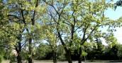 Kto to widział, żeby w maju kwitły razem kasztany i akacje?!