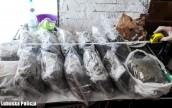 Dziesięć kilogramów marihuany nie trafi na rynek