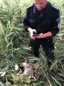 Policjanci pomogli skrajnie wyczerpanemu terierowi