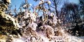 Jak Nowy Rok jasny i chłodny - cały roczek pogodny i płodny