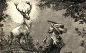 Biały jeleń, Bambi i inne wcielenia pięknego zwierzęcia