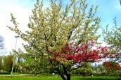 Gorąca nie zapowiadają, ale wiosennym ciepełkiem też da się cieszyć