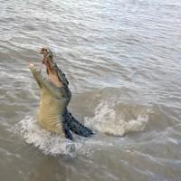 Krokodyle-na-rzece-w-Darwin.JPG