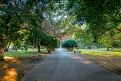 Będzie więcej zieleni w parku Wiosny Ludów