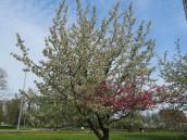 Jak to drzewiej na majówkach bywało