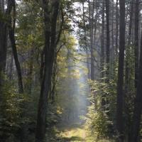 zdjecie-nr-4-IV-kat-Puszcze-Lubuskie-I-miejsce-Rafal-Soniewski-tyt-Droga-lesna.JPG