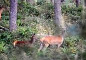 Leśne misterium jesieni