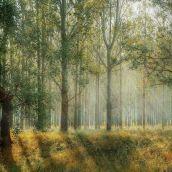 Światowy Dzień Lasów. Każdy z nas ma wpływ na ich stan