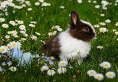 Wielkanoc u sąsiadów bliższych i dalszych
