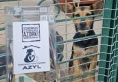 Azyl gospodarzem schroniska dla zwierząt