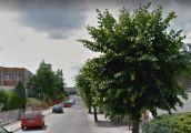 Opór jednak ma sens, drzewa na ulicy zostają