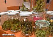 Grzyby halucynogenne, marihuana i krzewy konopi